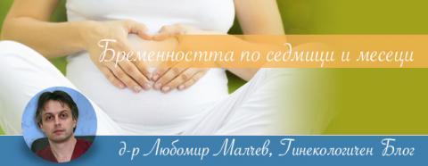 Бременността по седмици и месеци